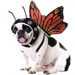 Fantasia para Cachorro de Borboleta