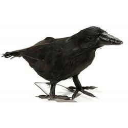 Pássaro Corvo Preto da Bruxa Malévola Bela Adormecida.